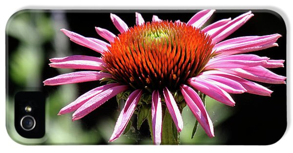 Pretty Pink Coneflower IPhone 5 Case by Rona Black