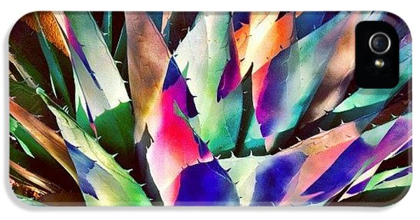 Psychedelic Agave IPhone 5 Case