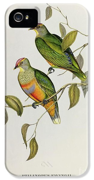Lovebird iPhone 5 Case - Ptilinopus Ewingii by John Gould