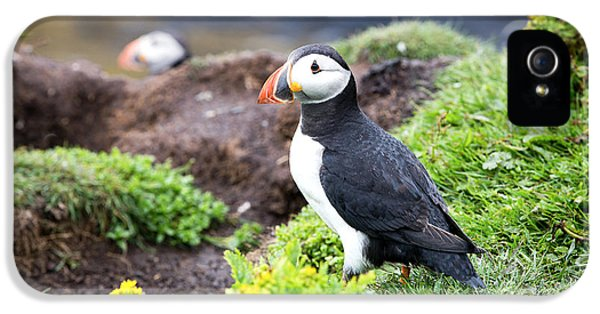 Puffin  IPhone 5 / 5s Case by Jane Rix