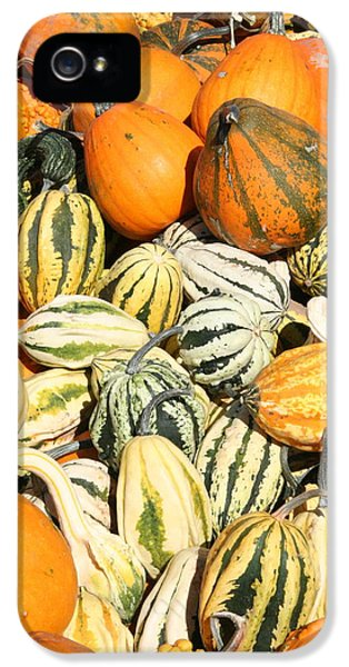 Pumpkin Field IPhone 5 Case by Patt Nicol