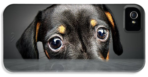 Puppy Longing For A Treat IPhone 5 Case by Johan Swanepoel