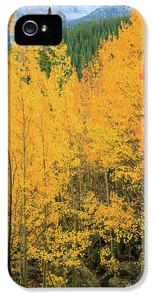 IPhone 5 Case featuring the photograph Pure Gold by David Chandler