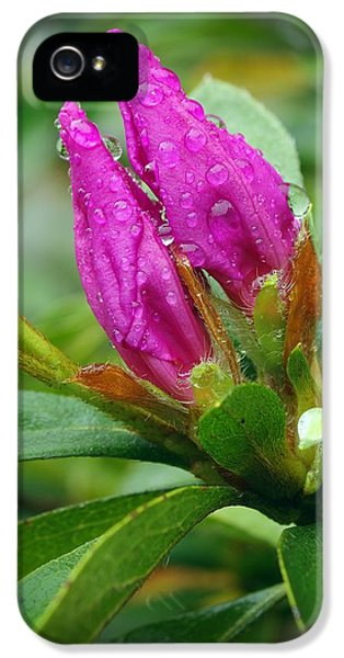 Purple Azalea After The Rains IPhone 5 Case by Richard Rizzo