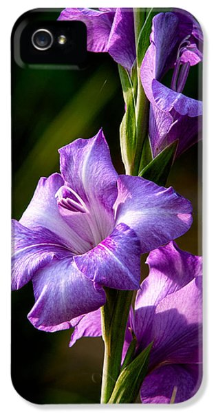 Purple Glads IPhone 5 Case by Christopher Holmes