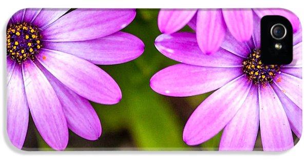Purple Petals IPhone 5 Case by Az Jackson