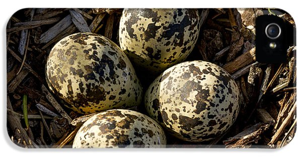 Quartet Of Killdeer Eggs By Jean Noren IPhone 5 Case by Jean Noren