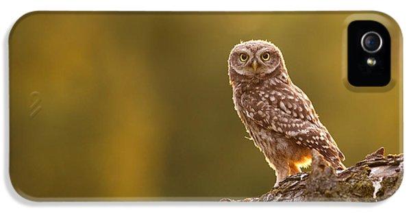 Qui, Moi? Little Owlet In Warm Light IPhone 5 Case
