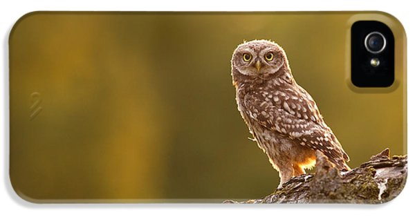 Qui, Moi? Little Owlet In Warm Light IPhone 5 Case by Roeselien Raimond