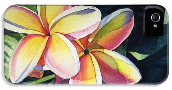 Flowers iPhone 5 Case - Rainbow Plumeria by Marionette Taboniar