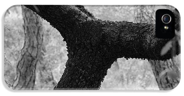 Breathe iPhone 5 Case - Rainy Trees by Guido Montanes Castillo