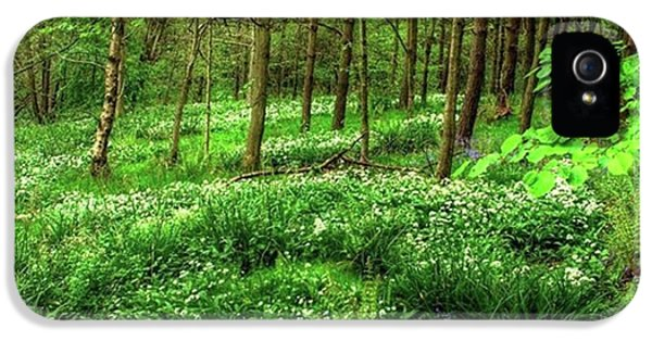 iPhone 5 Case - Ramsons And Bluebells, Bentley Woods by John Edwards