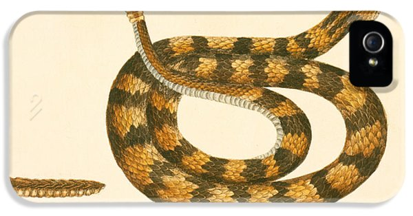 Rattlesnake IPhone 5 Case by Mark Catesby