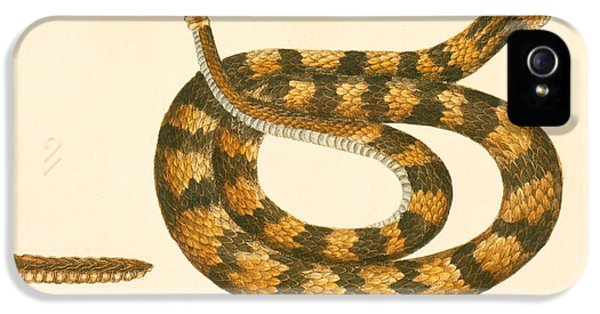 Rattlesnake IPhone 5 / 5s Case by Mark Catesby