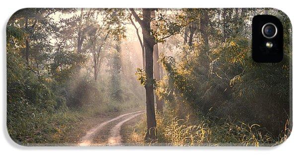 Rays Through Jungle IPhone 5 Case