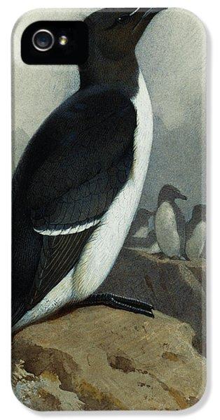 Razorbill IPhone 5 / 5s Case by Archibald Thorburn