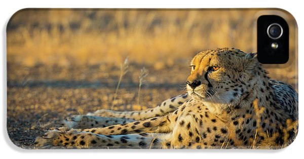 Reclining Cheetah IPhone 5 / 5s Case by Inge Johnsson