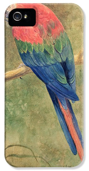 Macaw iPhone 5 Case - Red And Blue Macaw by Henry Stacey Marks