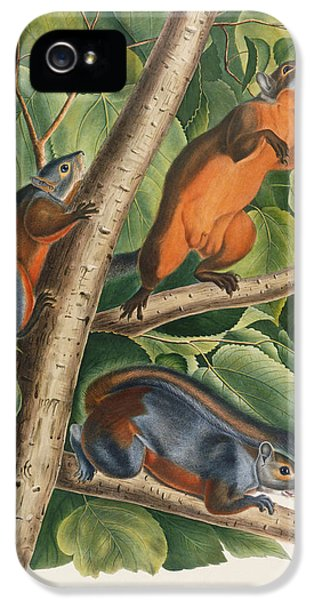 Red Bellied Squirrel  IPhone 5 / 5s Case by John James Audubon