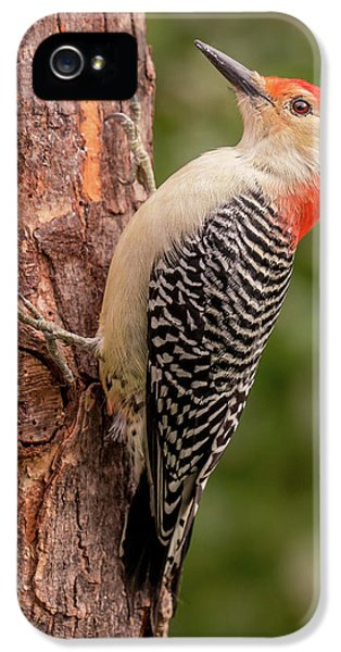 Red Bellied Woodpecker 3 IPhone 5 Case