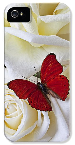 Red Butterfly On White Roses IPhone 5 Case