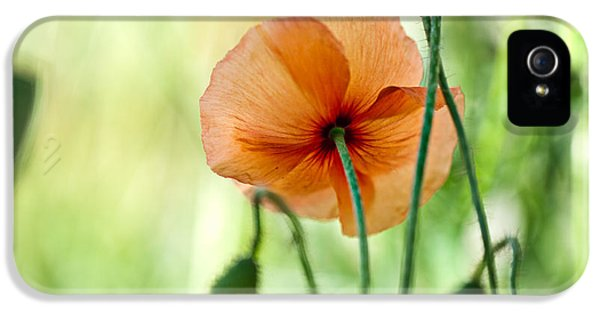 Red Corn Poppy Flowers 02 IPhone 5 Case