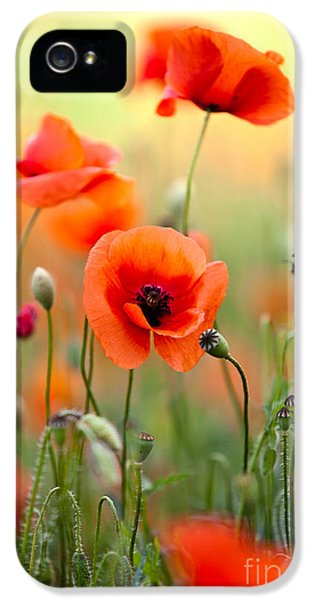 Red Corn Poppy Flowers 06 IPhone 5 Case
