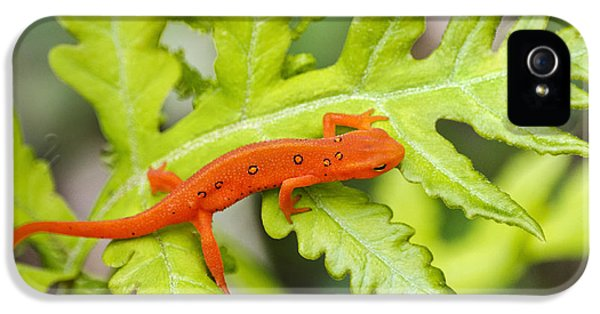Red Eft Eastern Newt IPhone 5 Case