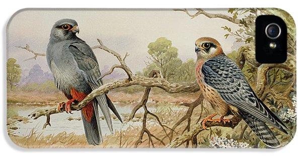 Red-footed Falcons IPhone 5 Case
