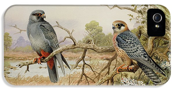Red-footed Falcons IPhone 5 Case by Carl Donner