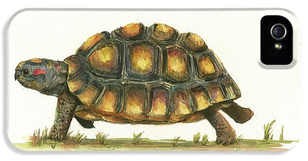 Turtle iPhone 5 Case - Red Footed Tortoise  by Juan Bosco