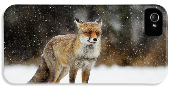 Red Fox In A Blizzard IPhone 5 Case