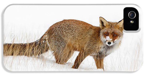 Red Fox In A Snow Covered Scene IPhone 5 Case by Roeselien Raimond