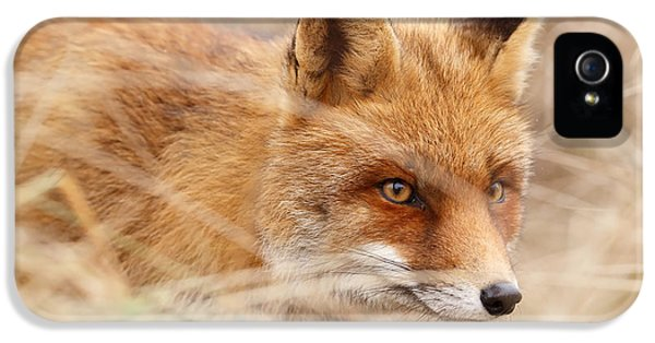 Red Fox On The Hunt IPhone 5 Case by Roeselien Raimond