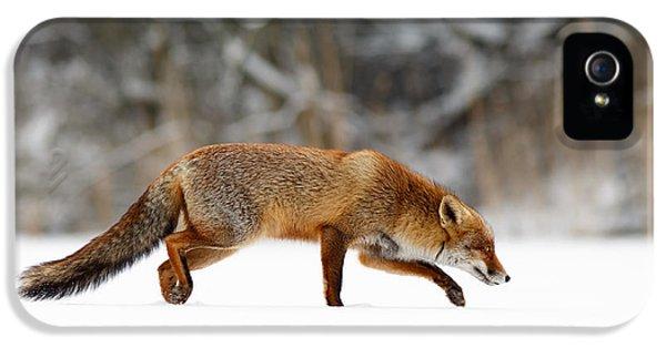 Red Fox Running Through A White World IPhone 5 Case
