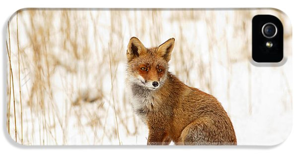 Red Fox Sitting In The Snow IPhone 5 Case