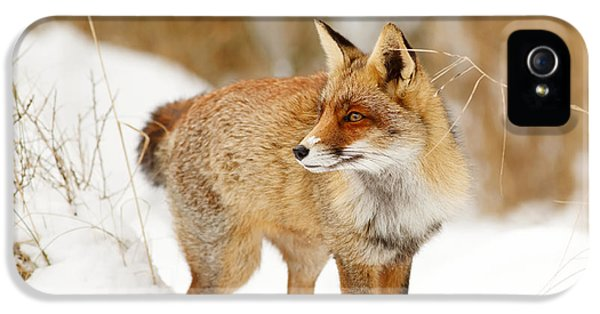 Red Fox Standing In The Snow IPhone 5 Case