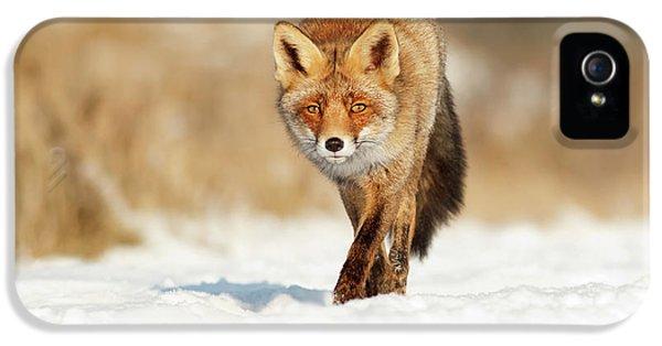 Red Fox Walking Through A Snow Landscape IPhone 5 Case