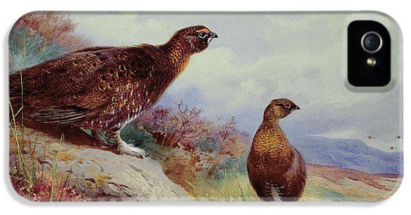 Red Grouse On The Moor, 1917 IPhone 5 Case by Archibald Thorburn