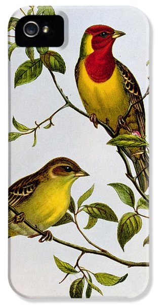 Red Headed Bunting IPhone 5 Case by John Gould