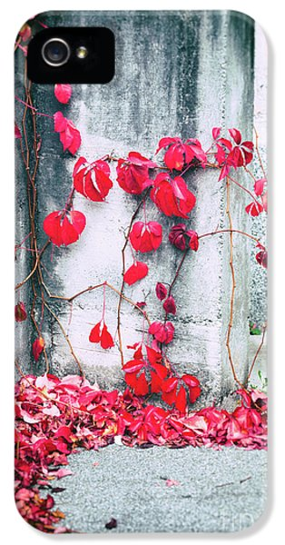 IPhone 5 Case featuring the photograph Red Ivy Leaves by Silvia Ganora