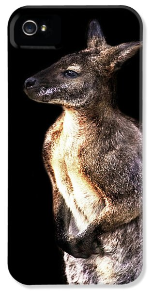 Kangaroo iPhone 5 Case - Red Kangaroo by Martin Newman
