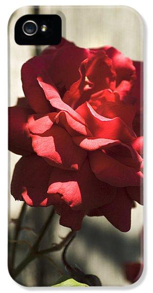 Red Rose IPhone 5 Case by Yulia Kazansky