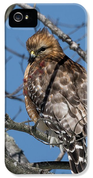 IPhone 5 Case featuring the photograph Red Shouldered Hawk 2017 by Bill Wakeley