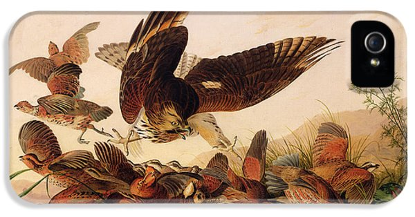 Red Shouldered Hawk Attacking Bobwhite Partridge IPhone 5 Case by John James Audubon