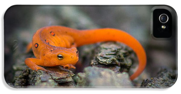 Red Spotted Newt IPhone 5 / 5s Case by Chris Bordeleau