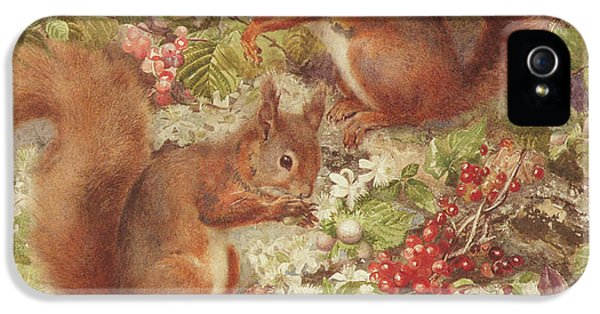 Red Squirrels Gathering Fruits And Nuts IPhone 5 Case by Rosa Jameson