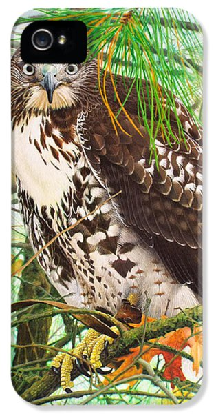 Red Tail Hawk, Thistle IPhone 5 Case by Ken Everett