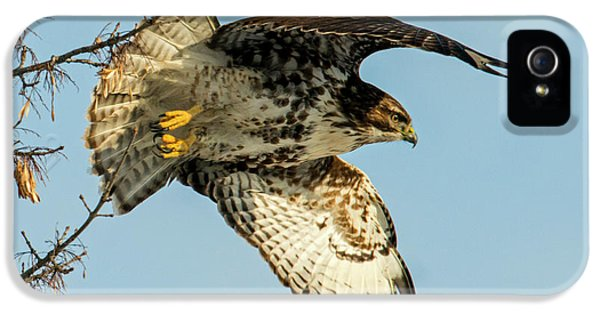 Red-tail  Takeoff IPhone 5 Case by Mike Dawson