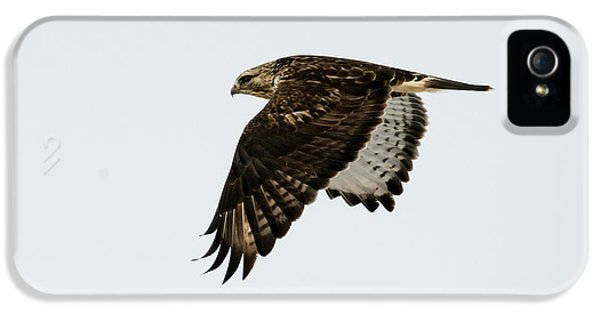 Red-tail Wings Down IPhone 5 Case by Mike Dawson